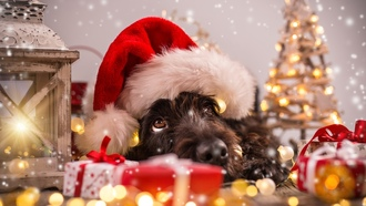 dog, decoration, cute, hristmas, santa hat, елка, ождество, funny, 2018, erry hristmas, символ 2018, овый од, mas, собака