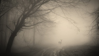 deer, nature, forest, misty, лес, trees, деревья, landscape, жуткий, creepy