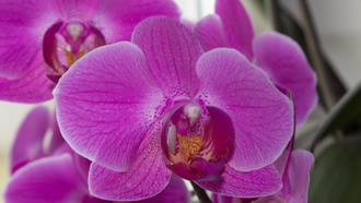 flower, orchids, purpleflower