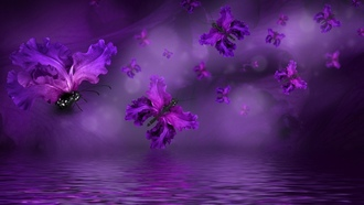 purple, butterflies, floral, бабочки, water, лепестки