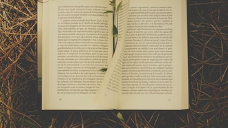 novel, grass, book