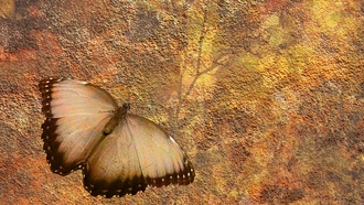 background, structur, butterfly, road