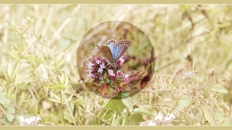 butterfly, background, screenblue