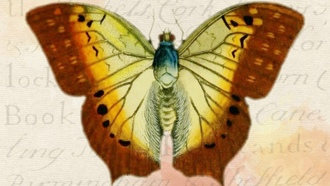 butterfly, background, vintage