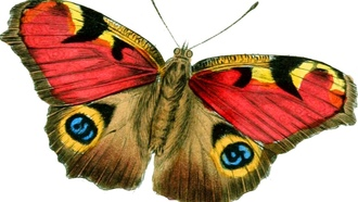 butterfly, bright, vintage, drawing