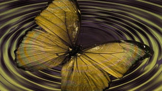 butterfly, insectwave, concentric