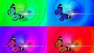 butterflypopart, animalinsect