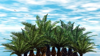 palmtreesonthebluesky, background