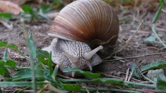 snailgrassbackground, animal