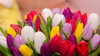 картинка тюльпаны на рабочий