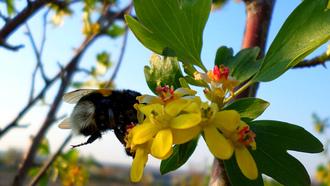 Картинки весеннее цветение, фотографии весна пришла скачать для ... | 186x330