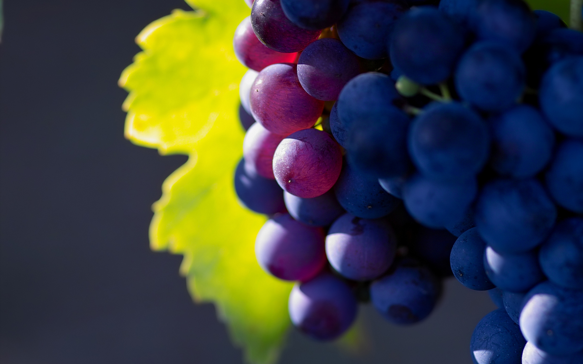 macro photo, grape, ����, ������, ��������, nature wallpapers, ����� ����, fruit, �������, ������� ����������
