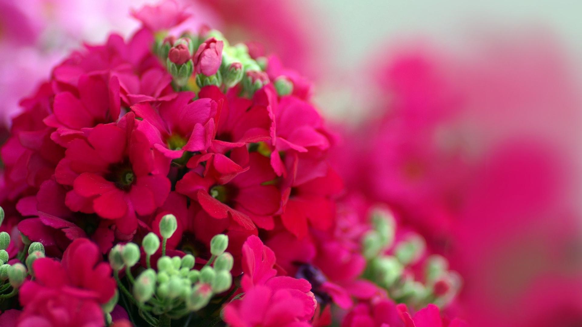 Самые красивые цветов на рабочий стол