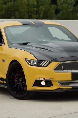 ford mustang, shelby, gt