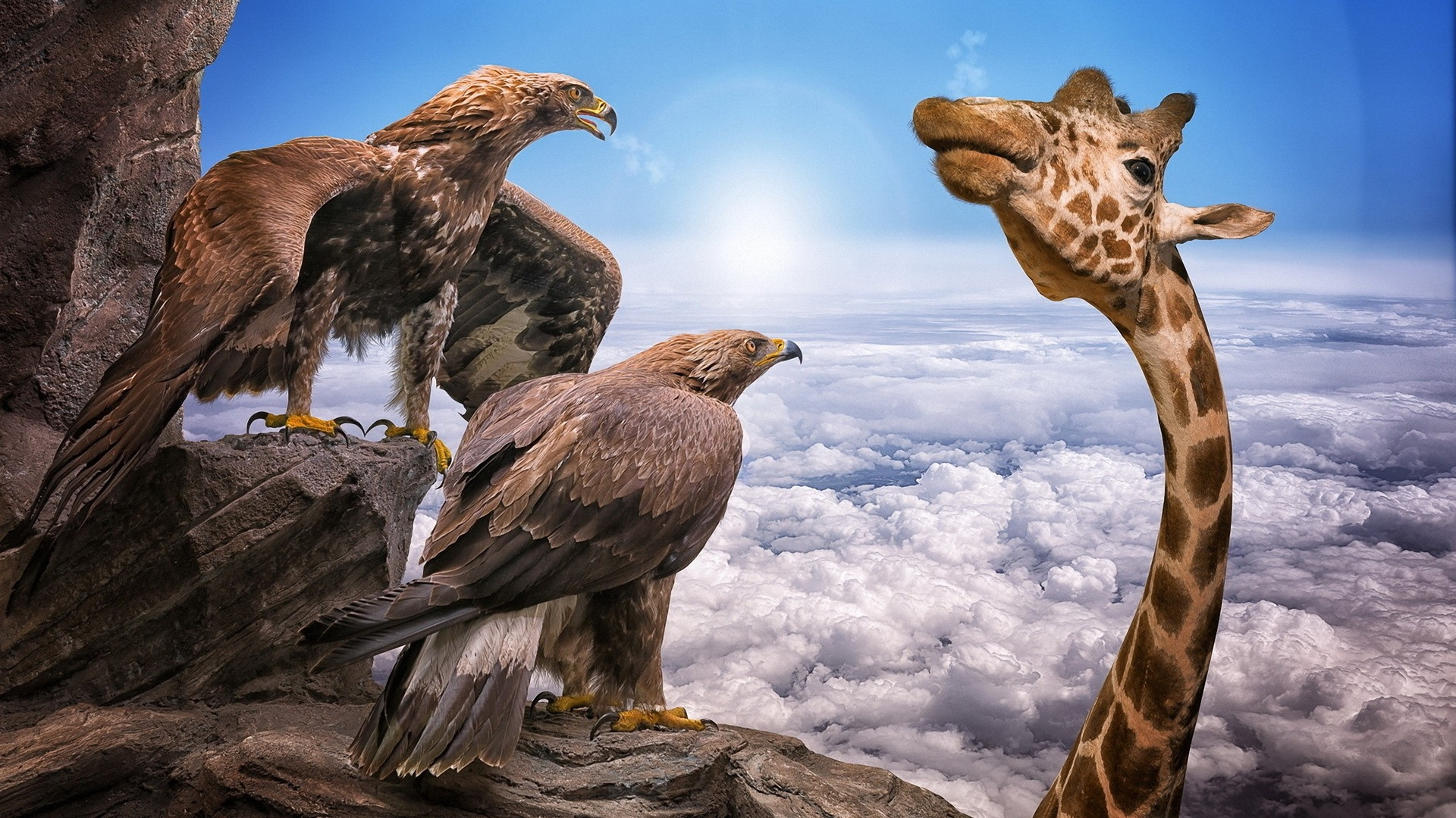 два, удивленных, орла, смотрят, на жирафа