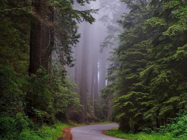 лес, растения, дорожка