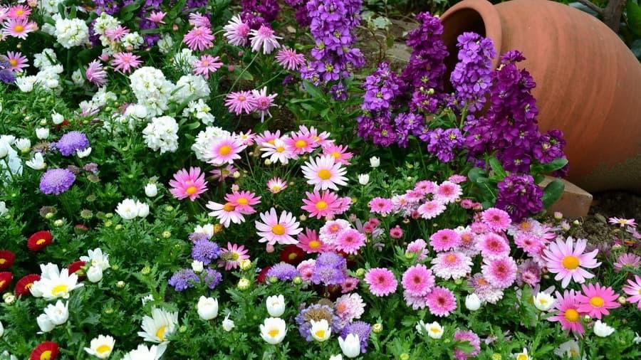 картинки на рабочий цветы: