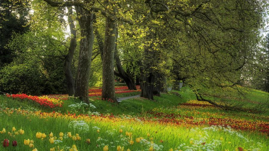 Деревья весна поляна аллея цветы