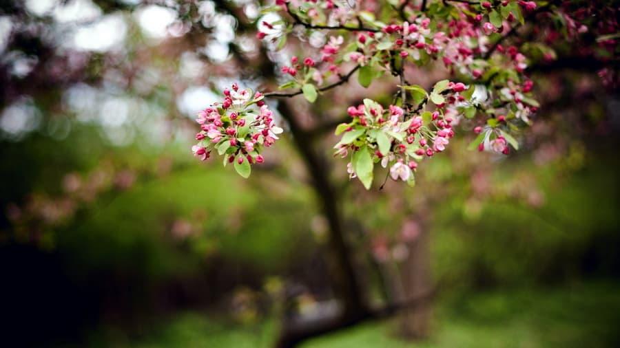 На тему природа 8385 весна 1399 сад 187