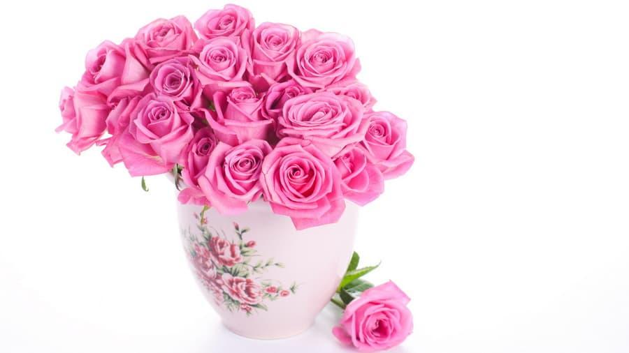 Белый фон ваза розовые розы