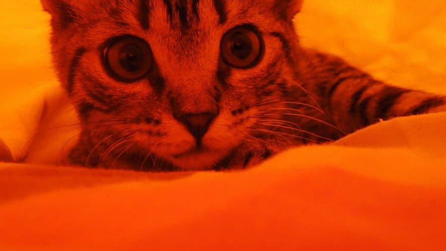Котэ кошки kitty кот красивые животные