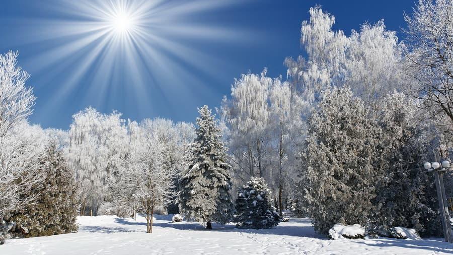Зима картинки иней лес природа снег
