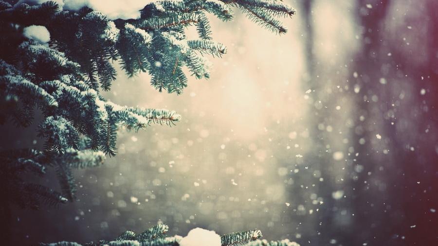 Природа ветви зима лес погода снег