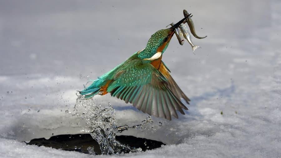 Птица зима животные рыбалка прорубь