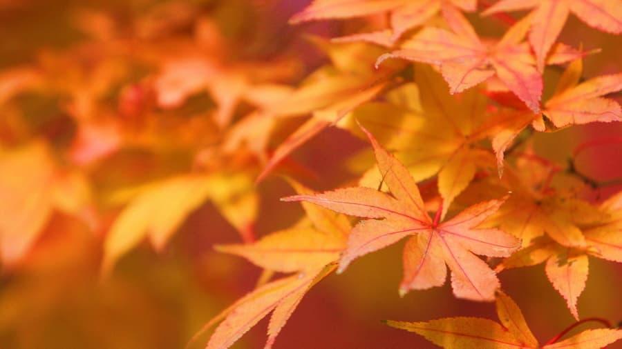 Макро осень листья на рабочий стол 6968