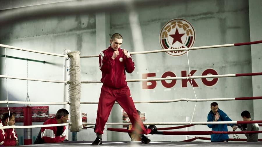 Обои бокс ринг спорт цска боец