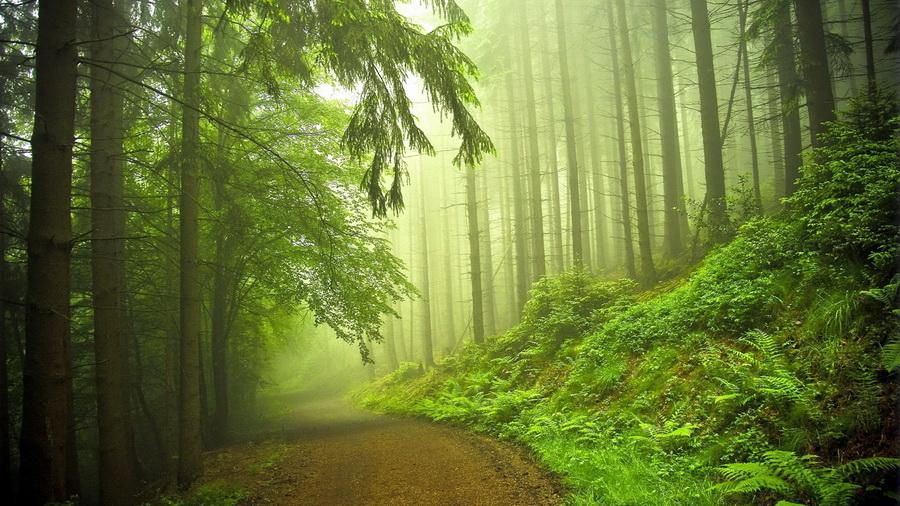 Картинки природа дорога лес природа