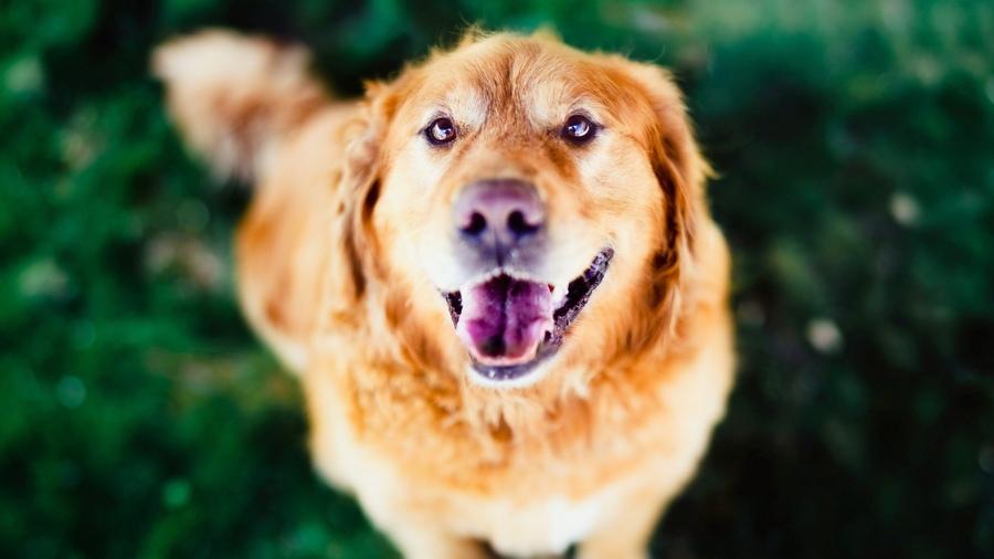 Домашние животные - Фото домашних животных - Виды 90