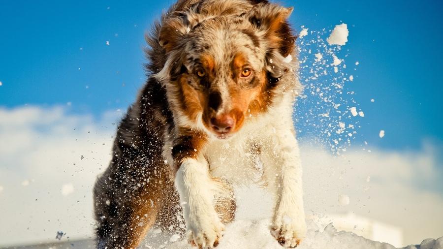 Обои dogs, snow, собаки, снег на рабочий стол 63412