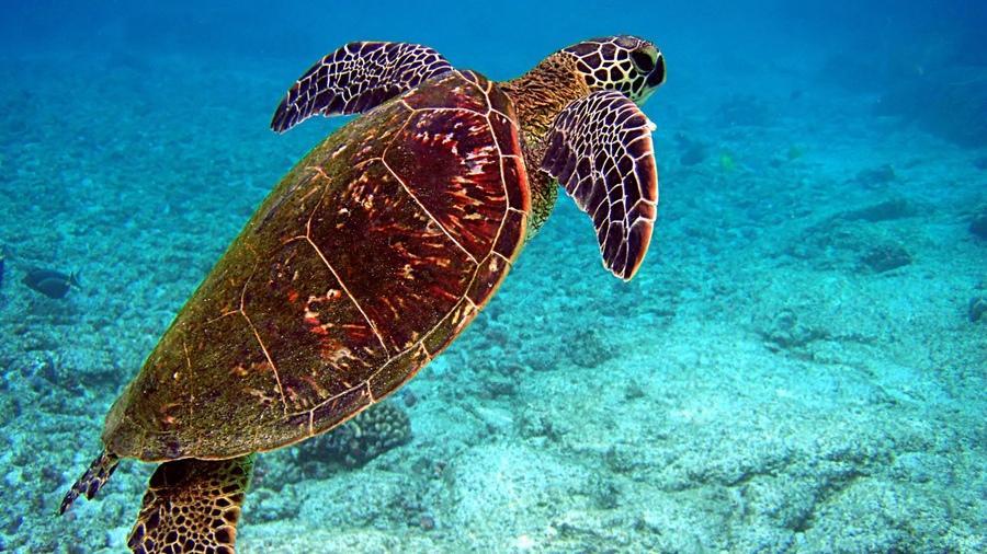 Природа пейзажи sea черепахи turtles