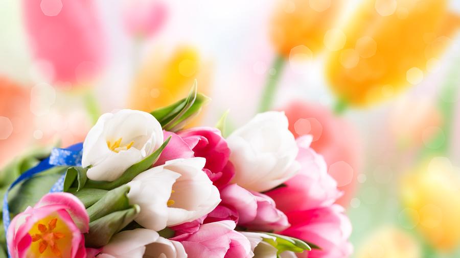 Цветы картинки фон цветы тюльпаны