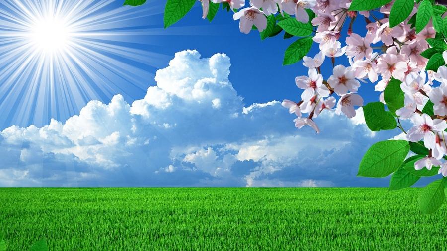 Природа весна цветы landscapes деревья