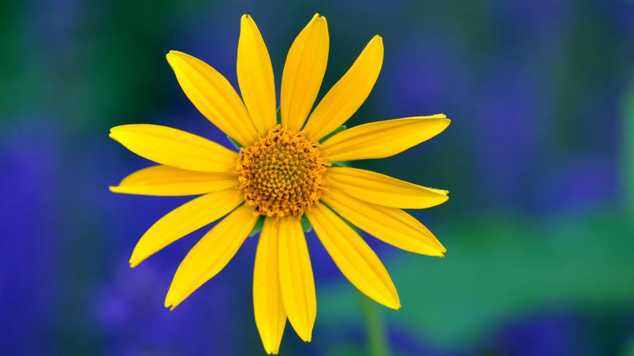 Фон желтый синий - 5c