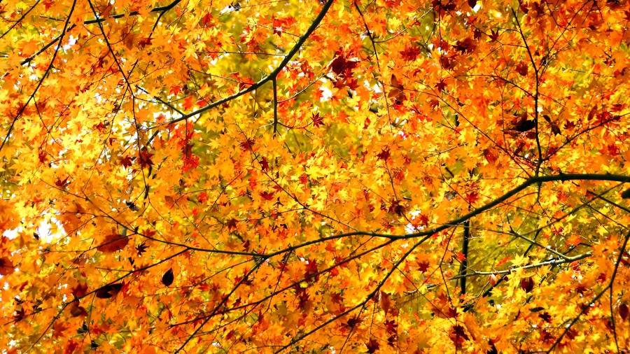 Рабочий стол осень картинки листья