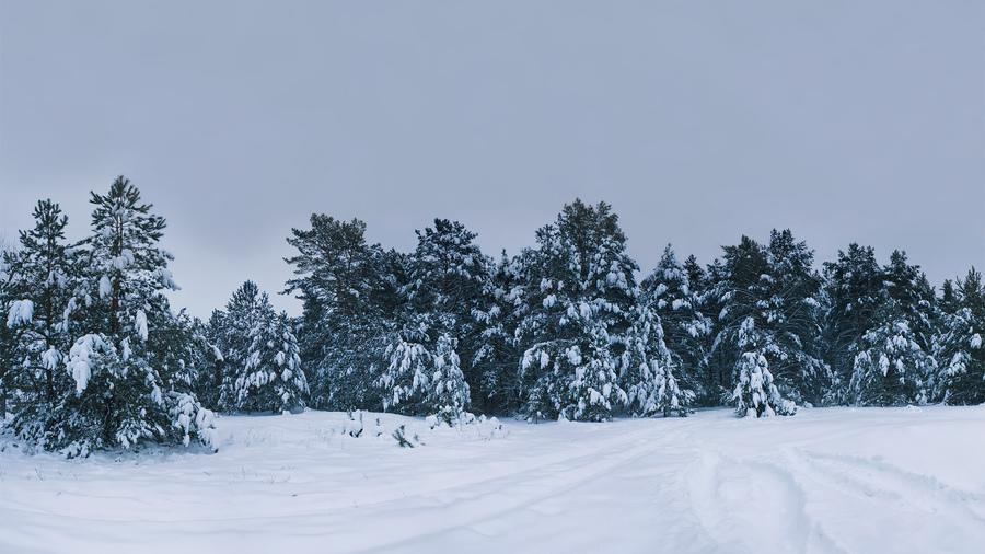 Зимние пейзажи дерево картинки ёлки