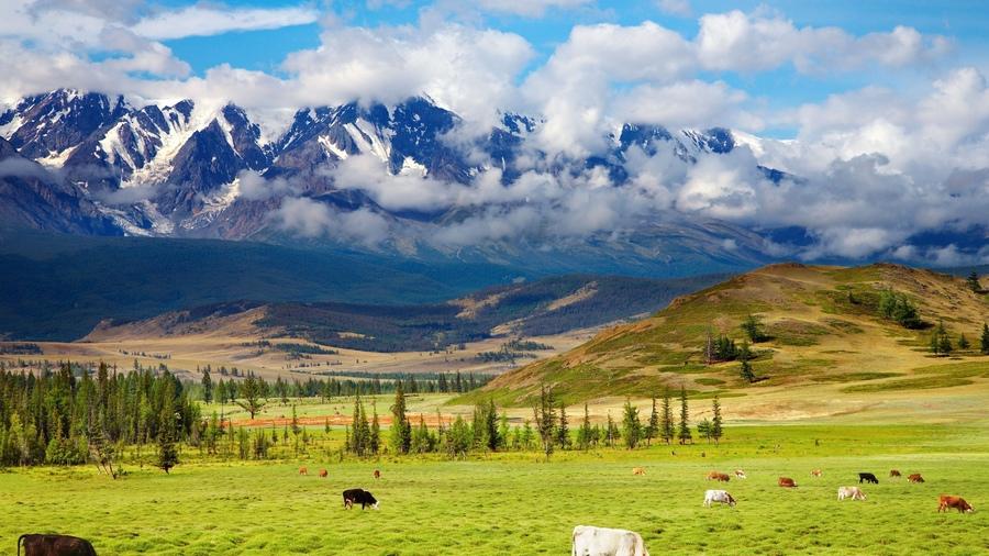 В Новой Зеландии будут откармливать скот травами