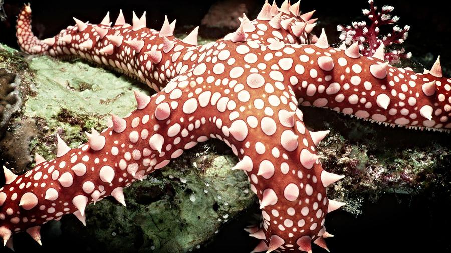 Океан звезда морская мир подводный