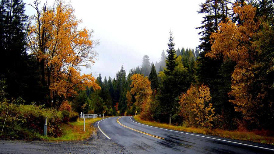 Пейзажи туман небо листья пейзаж