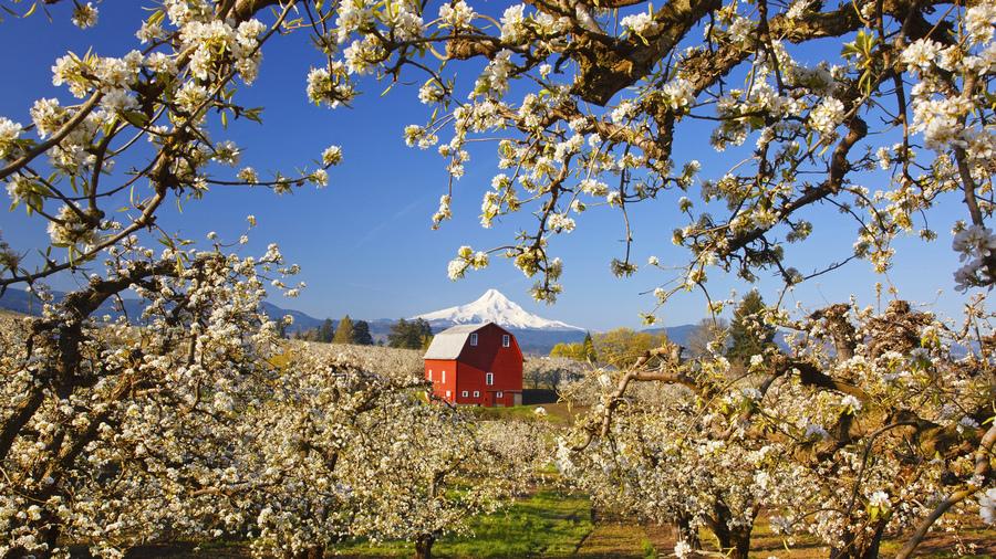 Деревья дом сад пейзаж весна яблони