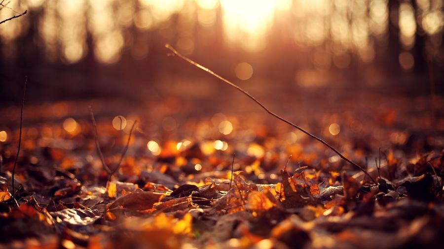 Фон осень