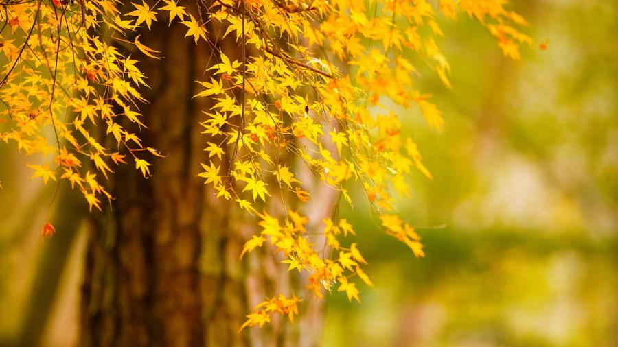 Обои осень природа дерево листья на