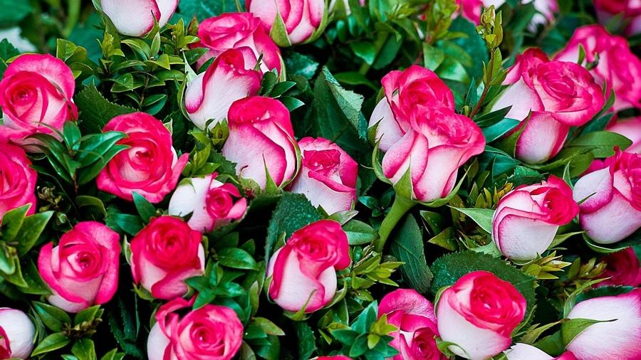 букет роз обои: