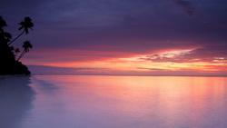 пальмы  картинки море закат