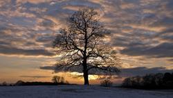 Иней небо облака снег деревья зима