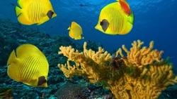 Подводные съемки рыбки кораллы