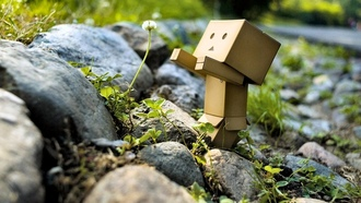box, flower, ����������, �����, ������, toy, danbo, ������, Danboard, robot, �������